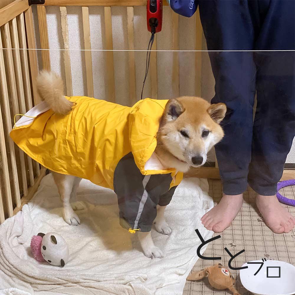 柴犬用おすすめカッパ(レインコート) 黄色 着用画像