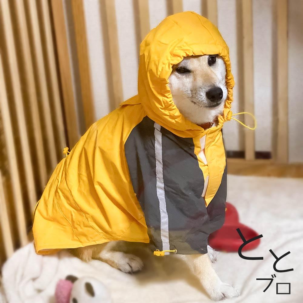 柴犬用おすすめカッパ(レインコート) 黄色 着用完了!
