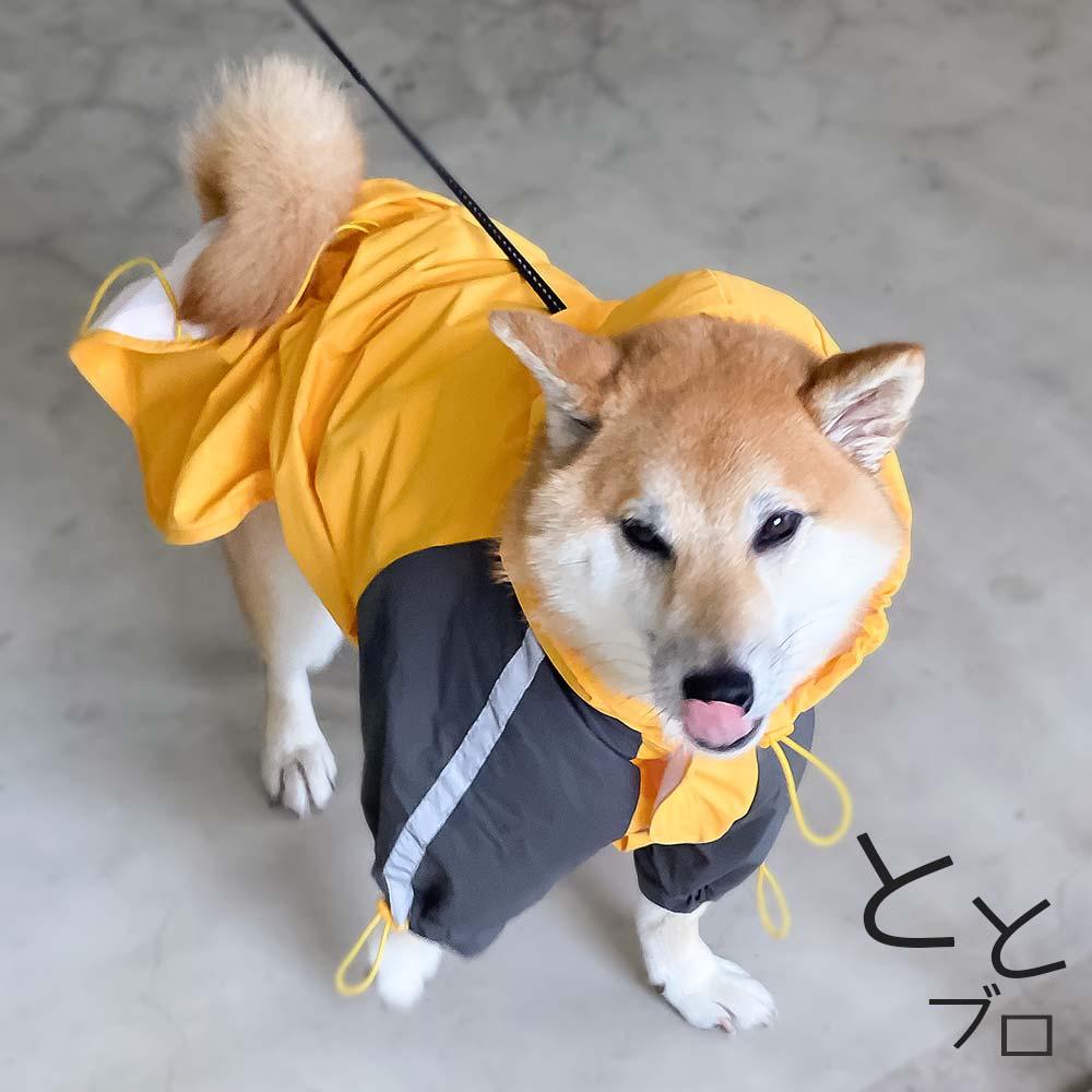 柴犬用おすすめカッパ(レインコート) 黄色 散歩中